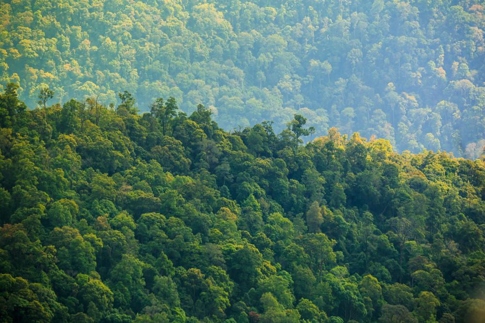An aerial view of a rainforest.